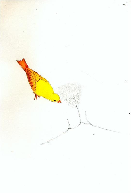 dessin-ero-16