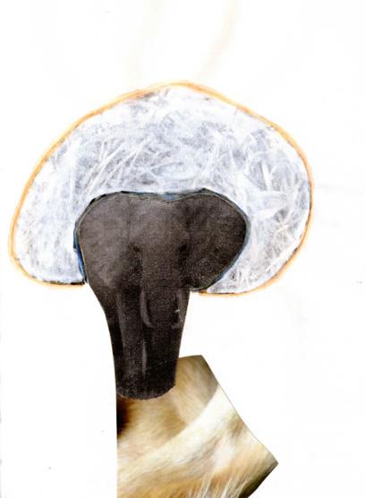 Memoire-d-elephant-web