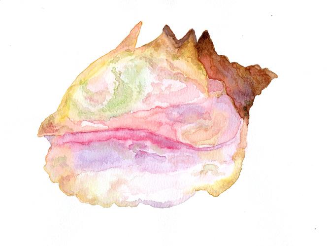 seashell-lanscape-1-72dpi