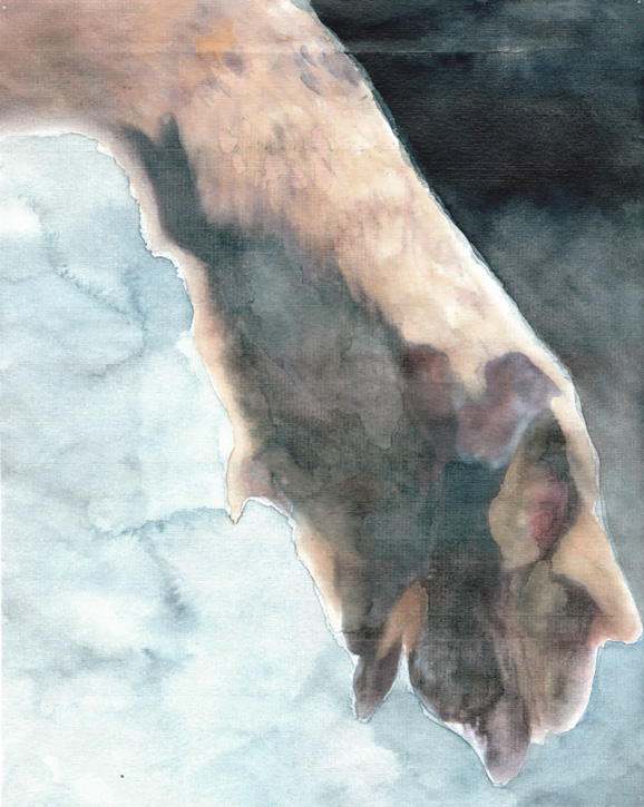 thylacine_04